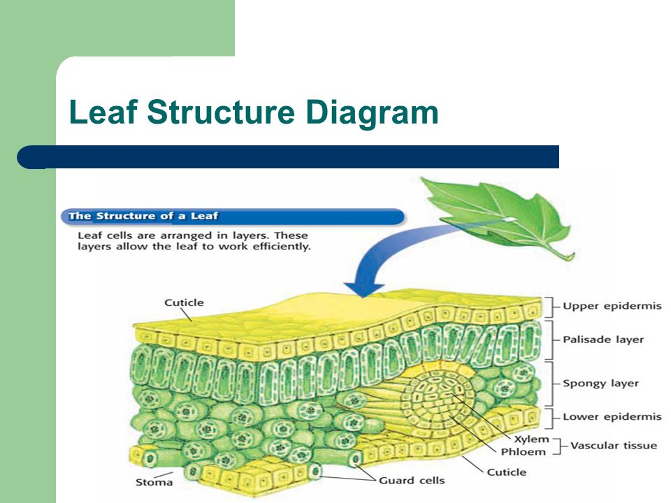 Introduction To Plants Ppt Download