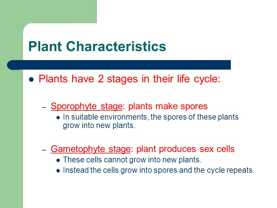 What produces sex cells in a plant
