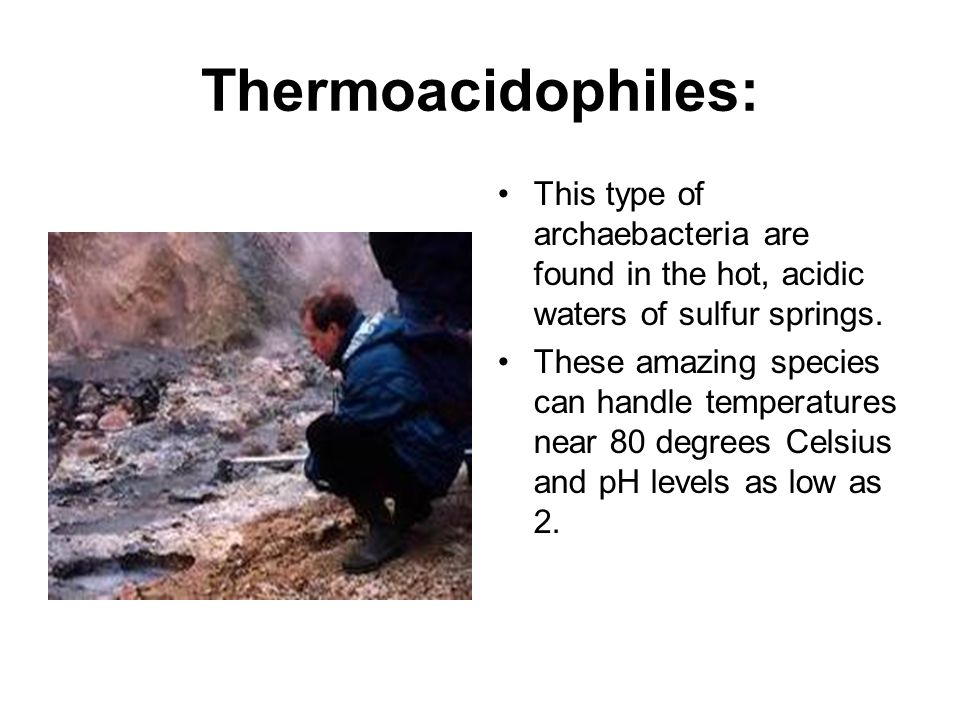 what are thermoacidophiles example of thermoacidophiles