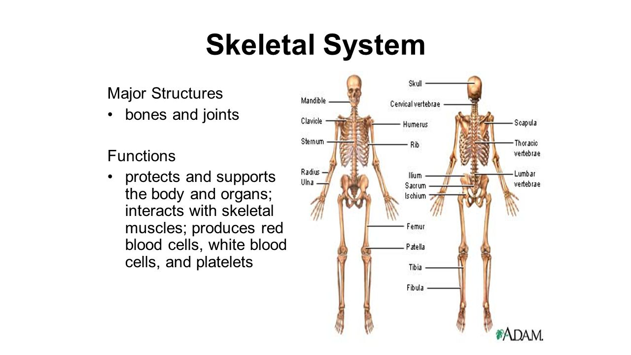Human Body Systems Ppt Video Online Download
