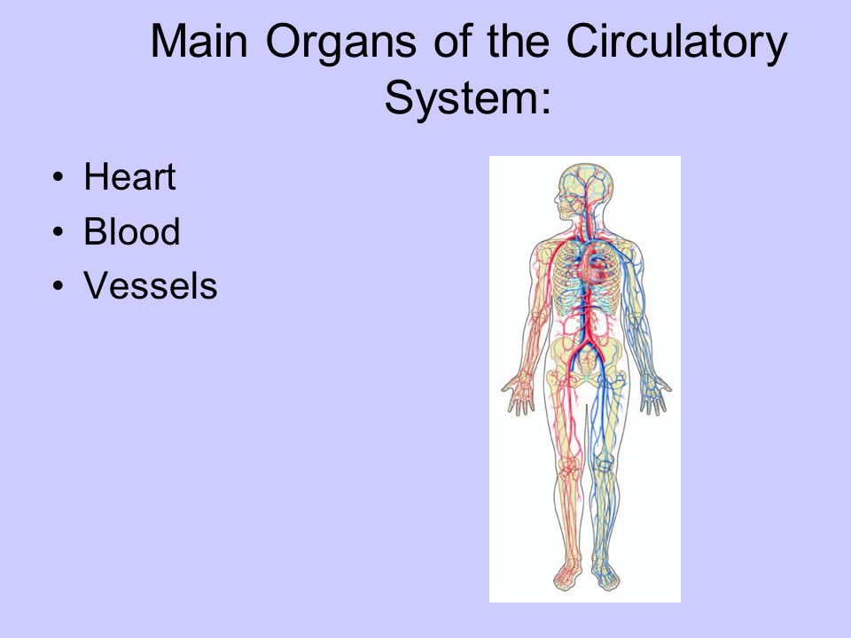 The Circulatory System Ppt Download
