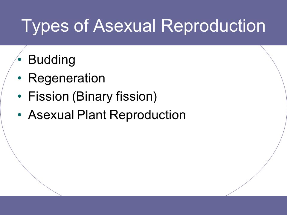 4 types of asexual reproduction photo 26