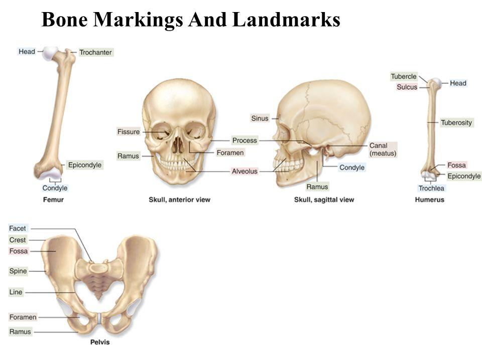 Normal Bone Marking Foot Best Photo Gallery Website With Normal Bone