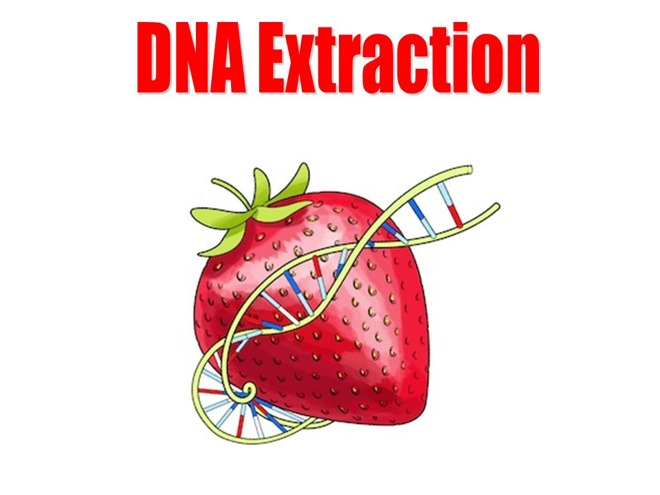 1 dna extraction