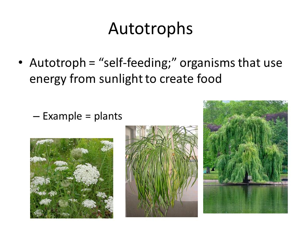Photosynthesis And Cellular Respiration Ppt Video Online Download