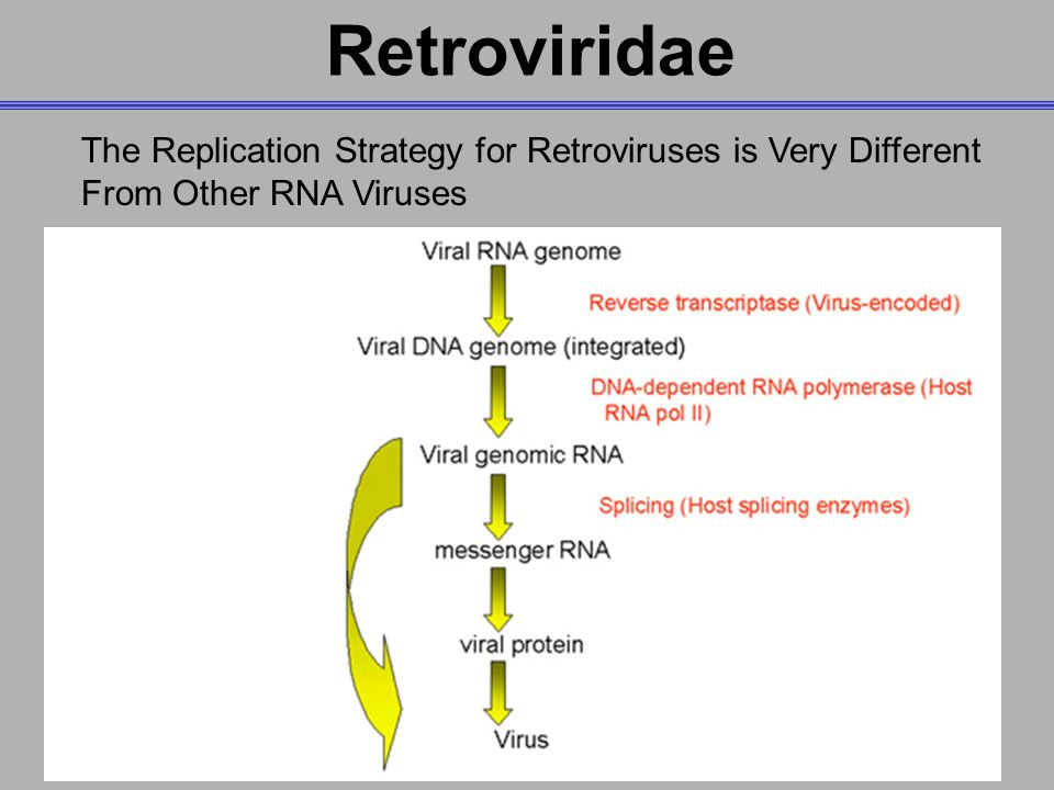 structure and rerplication of retroviruses Envelope this virus structure is a conventional icosahedral or helical structure that is surrounded by a lipid bilayer membrane, meaning the virus is encased or enveloped.