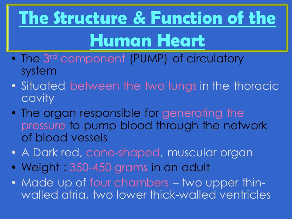 BIOLOGY FORM The Circulatory System. - ppt video online download