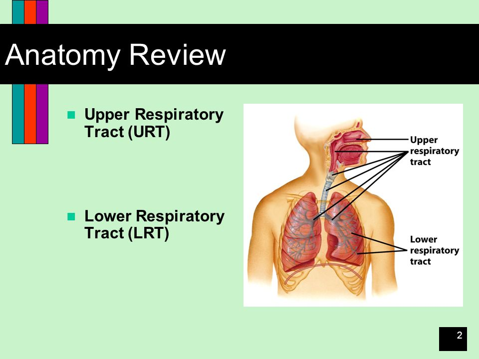 Diseases Of The Respiratory System Ppt Download
