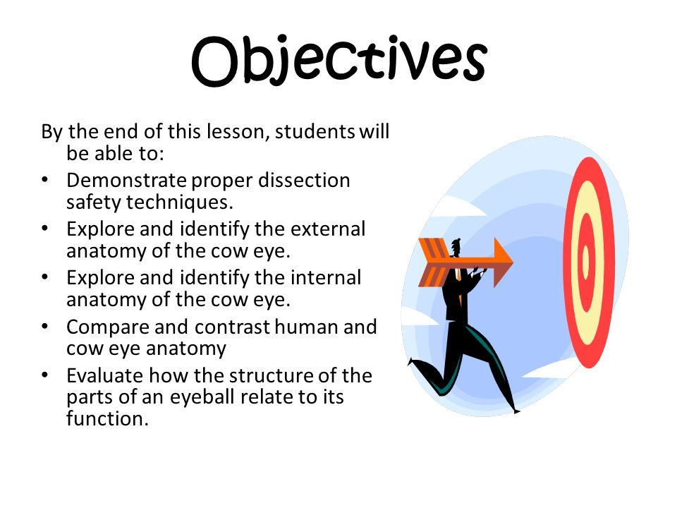 Cow Eye Dissection Welcome to Cow Eye Dissection. This powerpoint ...