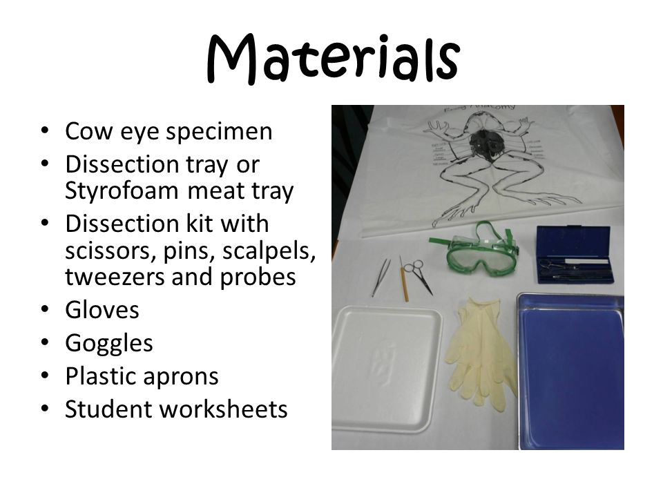 Cow Eye Dissection Wele To This Powerpoint. Materials Cow Eye Specimen Dissection Tray Or Styrofoam Meat. Worksheet. Cow Eye Dissection Worksheet At Clickcart.co