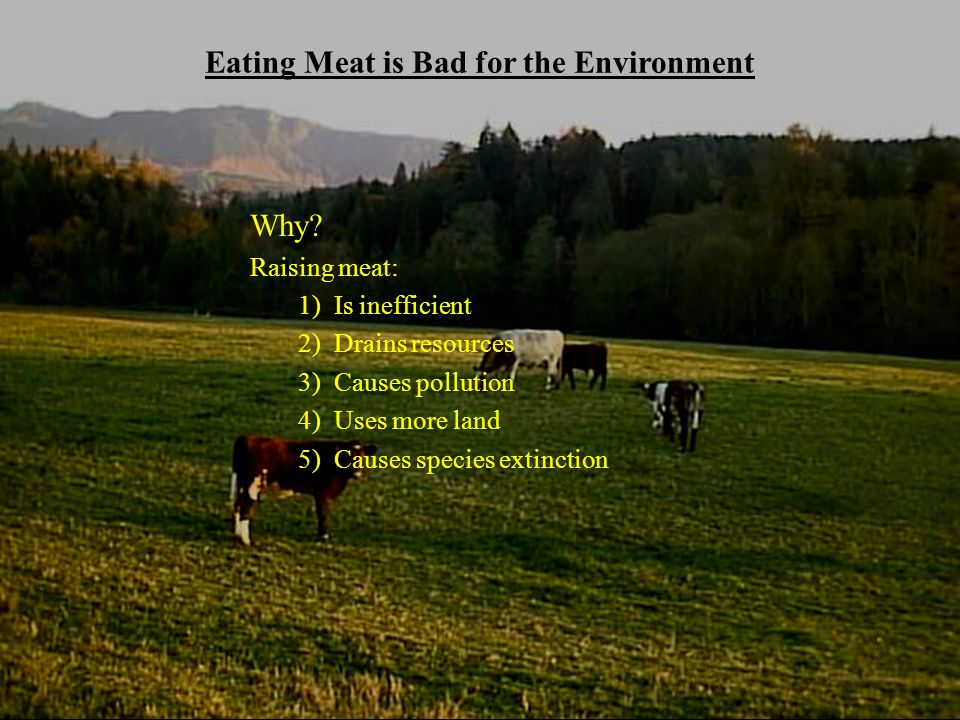 is it bad to eat meat and dairy together vegetarianism environmental health and ethical 648