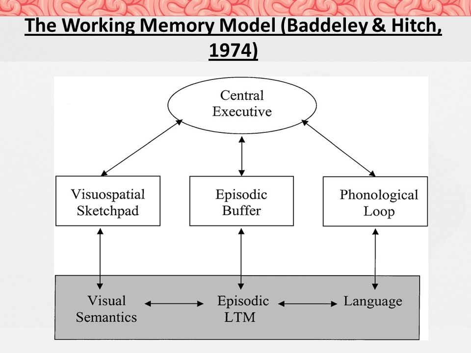 working memory model doc Synaptic mechanisms and network dynamics underlying spatial working memory in a cortical network model cerebral cortex, 10(9), 910-923 some parts of this implementation are inspired by material from stanford university, bioe 332: large-scale neural modeling, kwabena boahen & tatiana engel, 2013, online available.