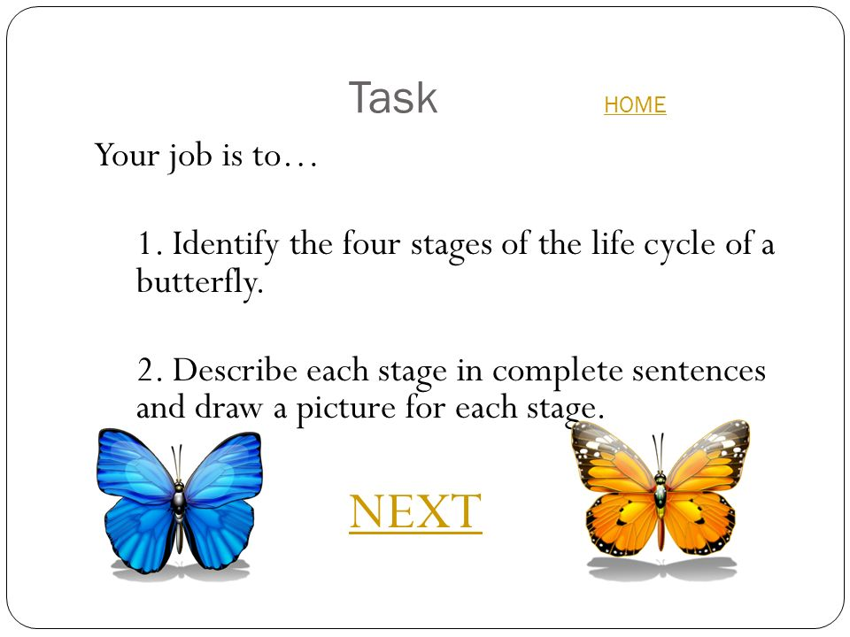 The Life Cycle Of A Butterfly Webquest Ppt Download
