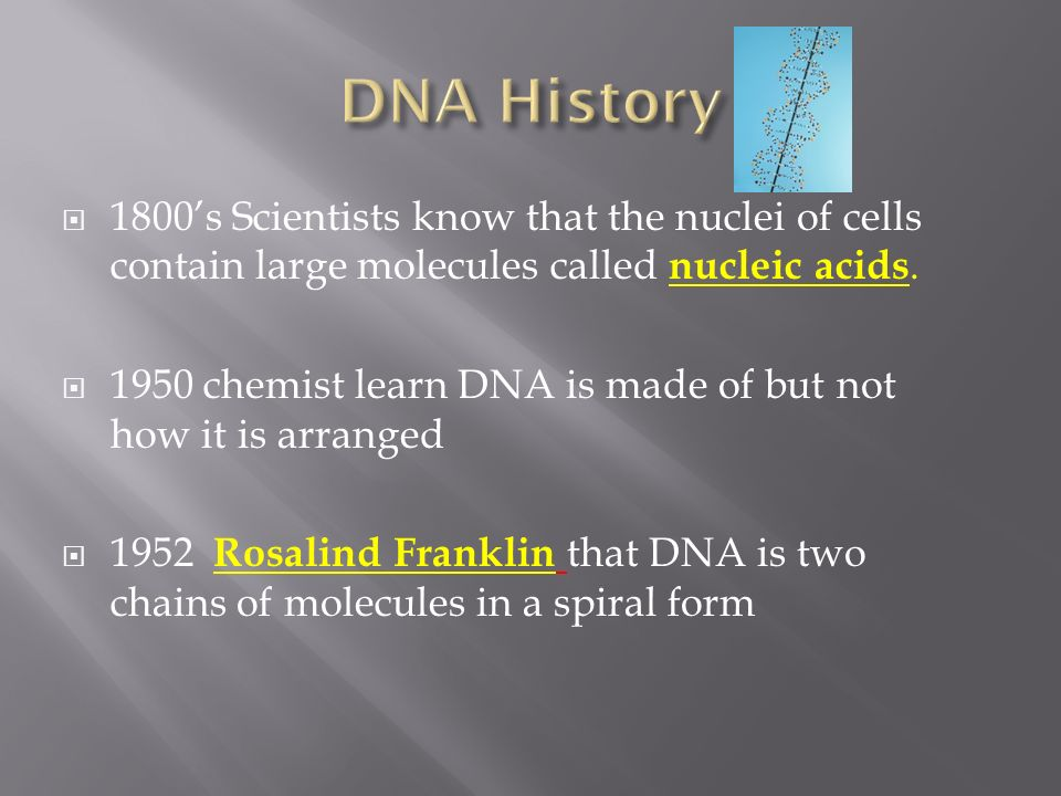 DNA History 1800's Scientists know that the nuclei of cells contain large molecules called nucleic acids.