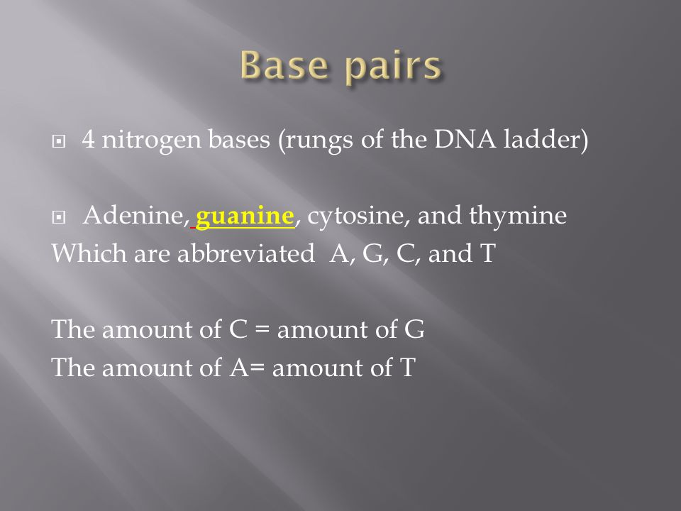 Base pairs 4 nitrogen bases (rungs of the DNA ladder)
