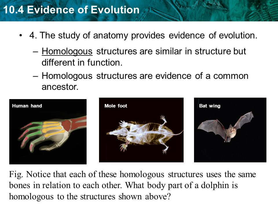 Evidence For Evolution Anatomy Choice Image Human Body Anatomy