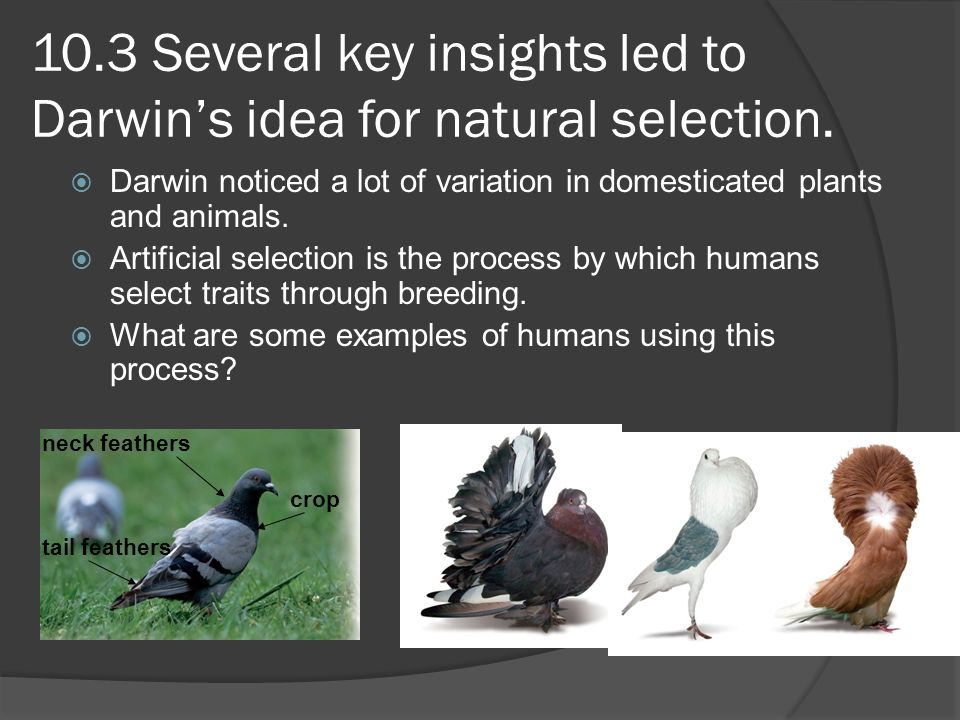10.3 Several key insights led to Darwin's idea for natural selection.