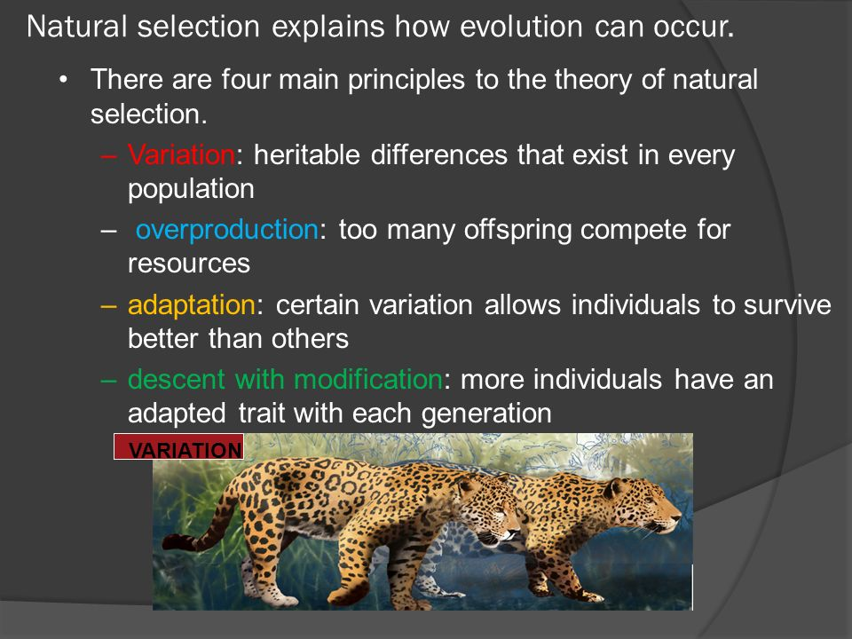 Natural selection explains how evolution can occur.