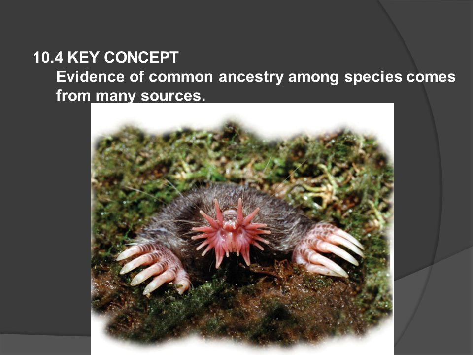 10.4 KEY CONCEPT Evidence of common ancestry among species comes from many sources.