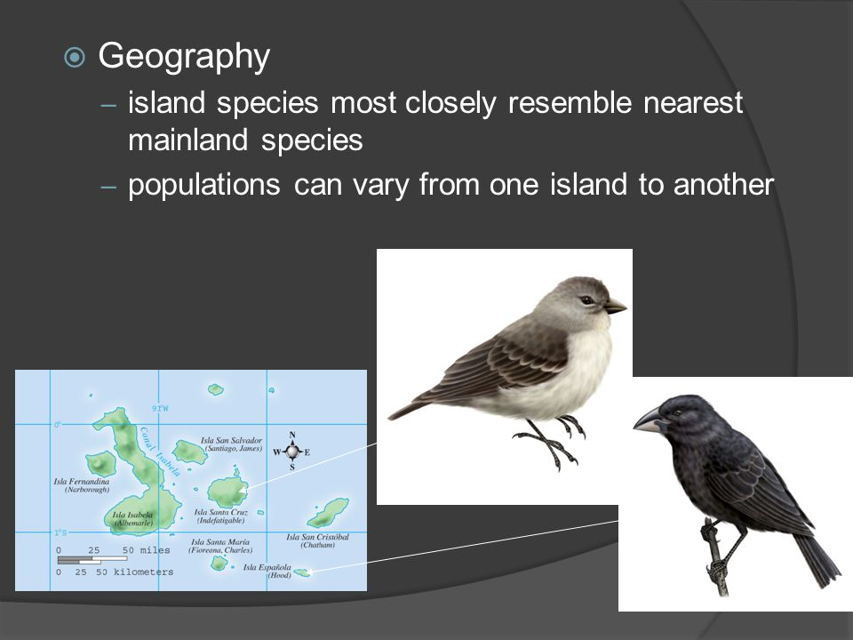 Geography island species most closely resemble nearest mainland species.