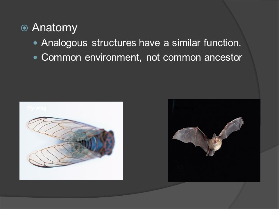 Anatomy Analogous structures have a similar function.