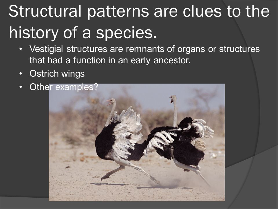 Structural patterns are clues to the history of a species.