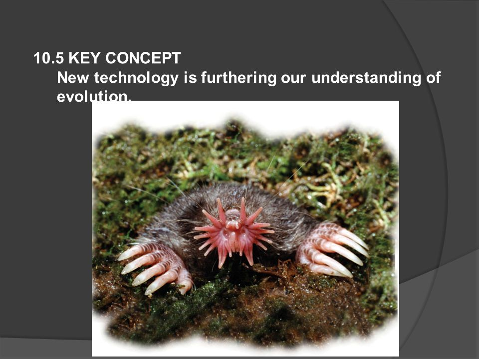 10.5 KEY CONCEPT New technology is furthering our understanding of evolution.