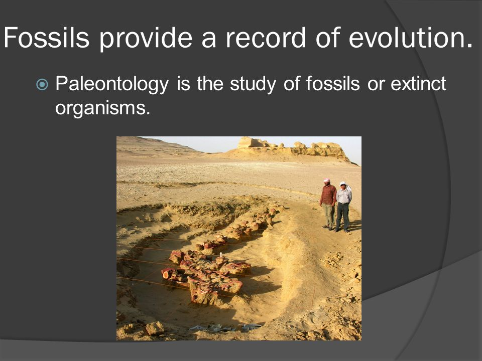 Fossils provide a record of evolution.