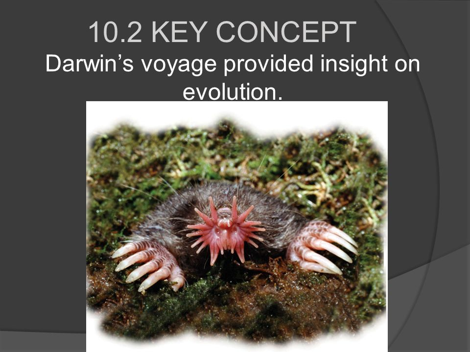 10.2 KEY CONCEPT Darwin's voyage provided insight on evolution.