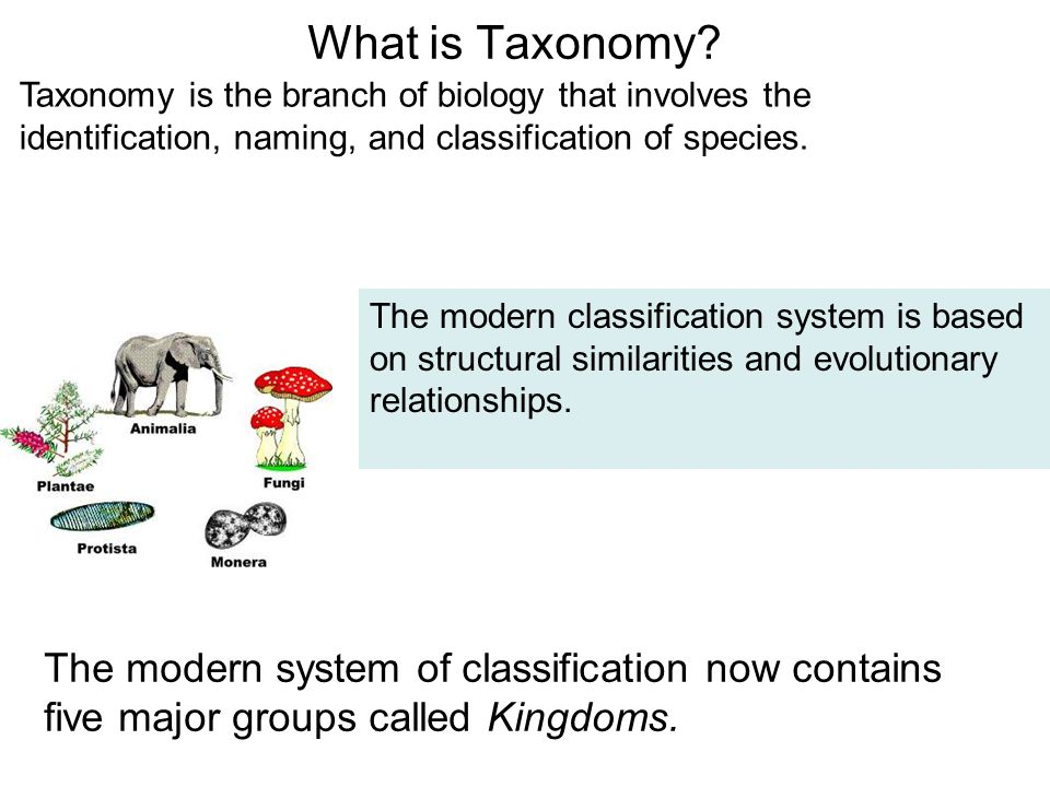 modern classification systems are based on