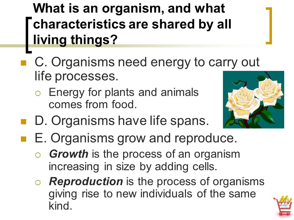 C. Organisms need energy to carry out life processes.
