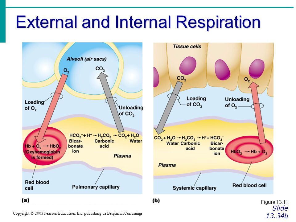 Carbonic >> Gas Exchange Regulation of Respiration Dr.Khaled Helmy. - ppt download