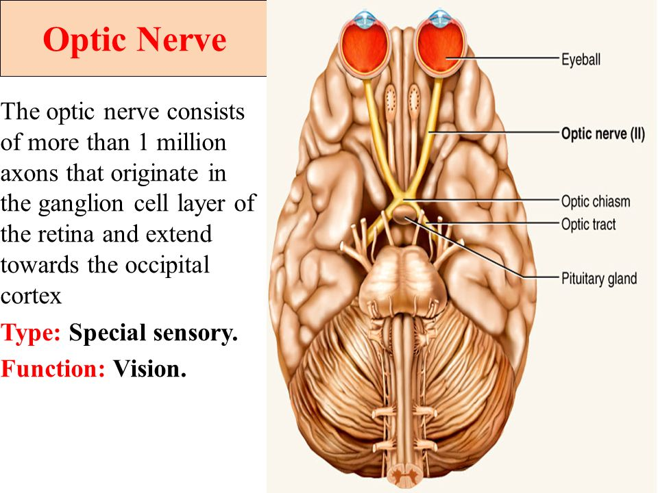 Cranial nerves II,III, IV,VI and Visual Pathway - ppt video online ...