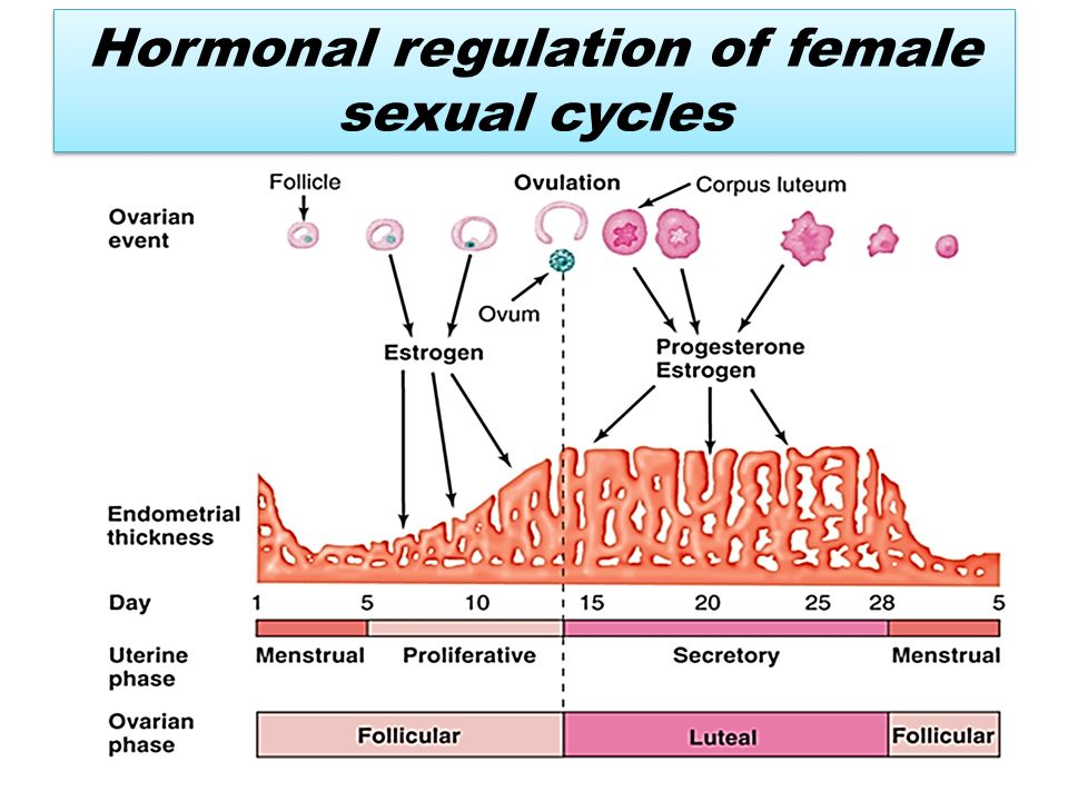 When Do You Ovulate