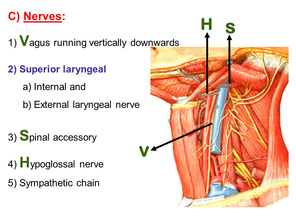 Suboccipital Triangle Ppt Video Online Download
