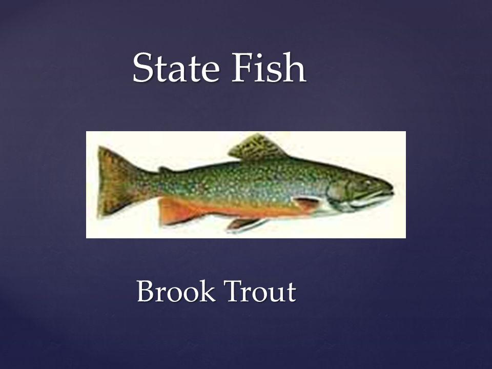 West Virginia State Symbols Ppt Download