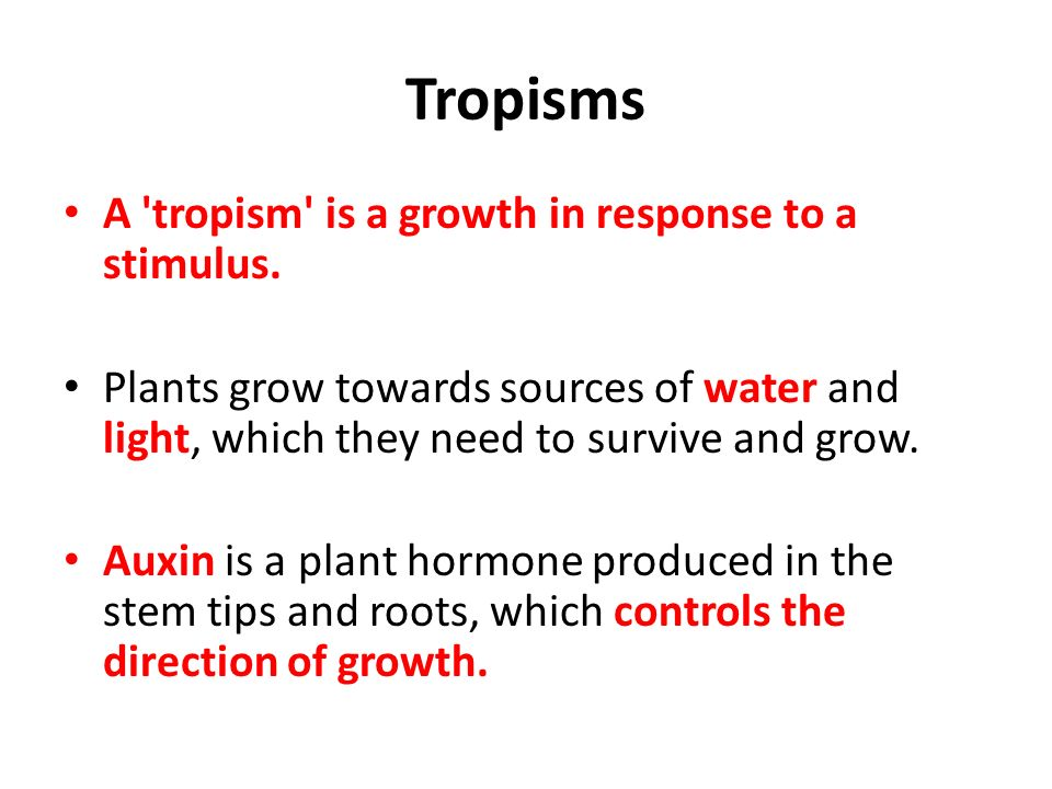 Homework Study For Homeostasis Test On Thursday Ppt Video Online. Tropisms A Tropism Is Growth In Response To Stimulus. Worksheet. Plant Tropism Worksheet At Clickcart.co
