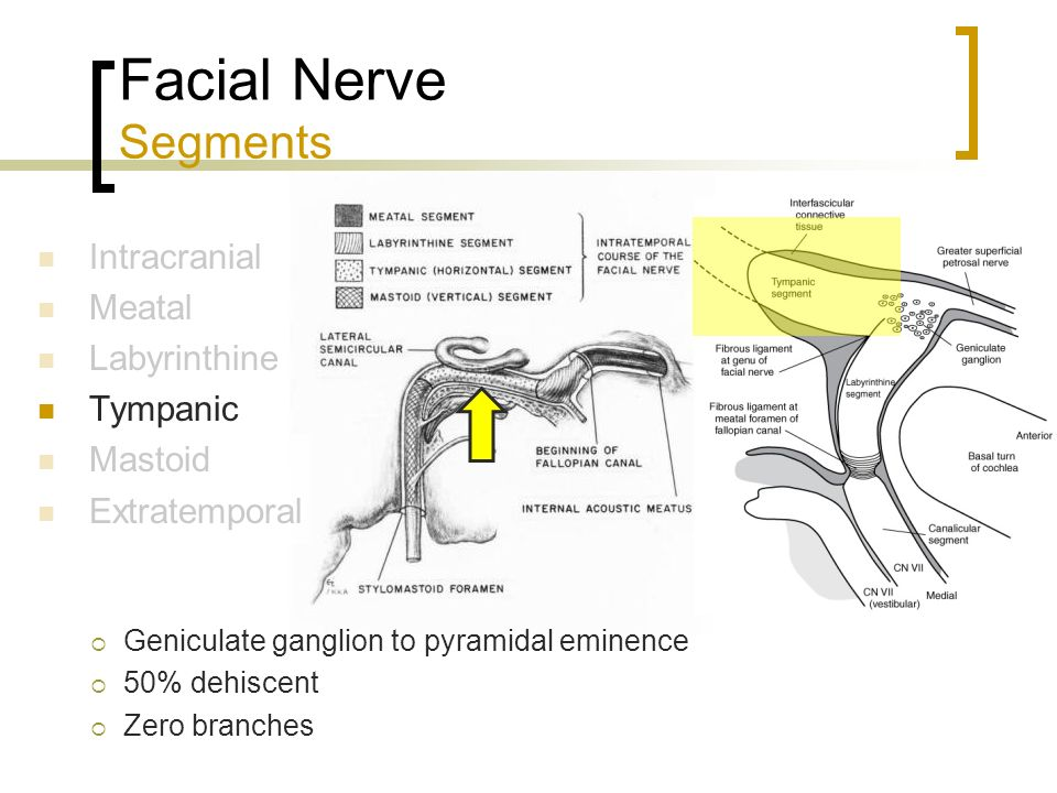 The Facial Nerve Sami Alharethy Ppt Video Online Download