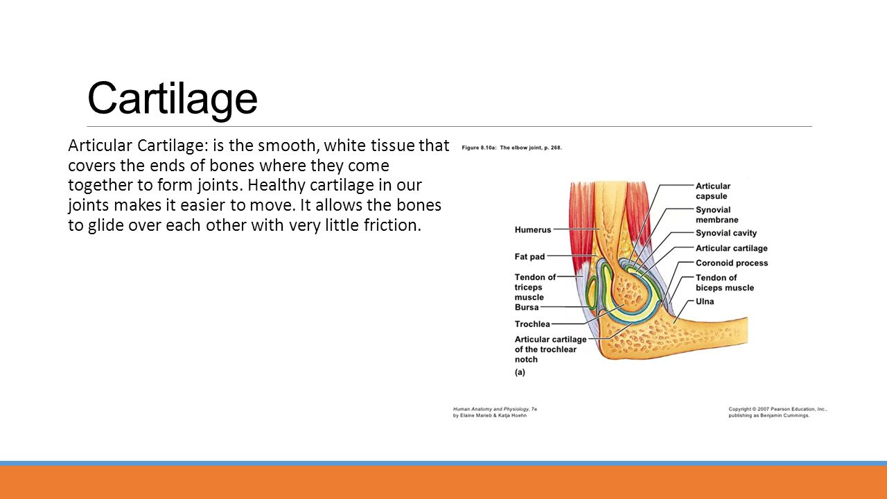 the elbow joint is extremely stable because