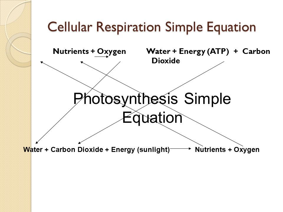 Cellular respiration simple diagram wiring cellular respiration ppt video online download cellular respiration easy diagram cellular respiration simple diagram ccuart Choice Image