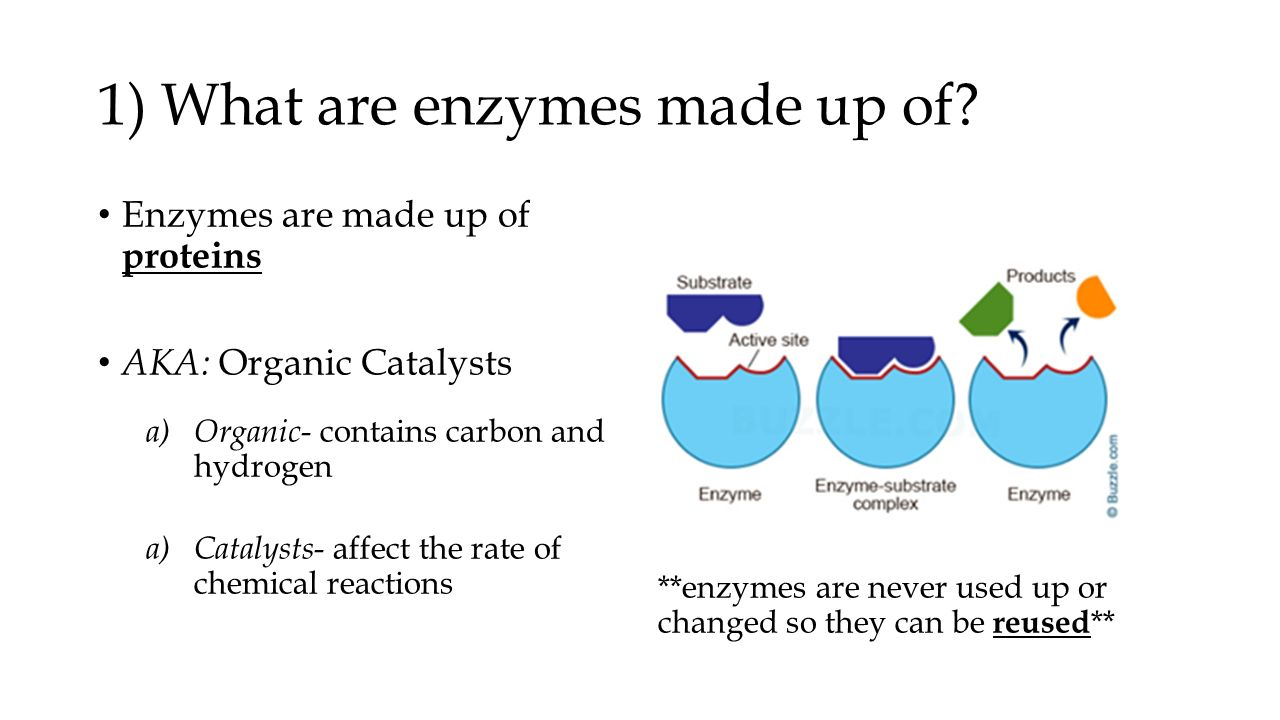 what are enzymes made of