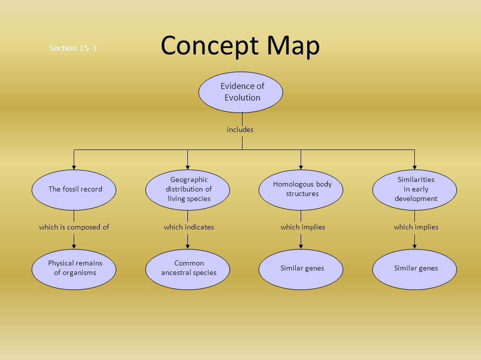 Concept Map About Evolution.Evidence For Evolution Ppt Video Online Download