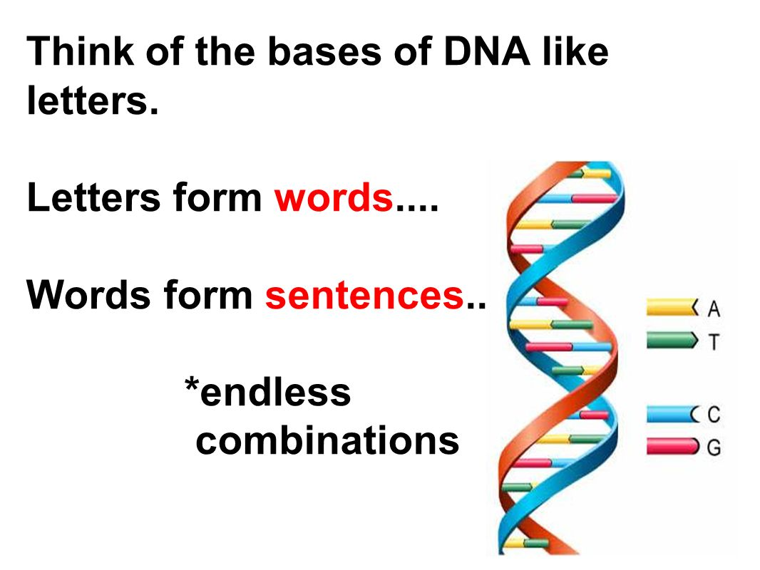 what is the four letter dna alphabet dna quot the blueprint of quot ppt 24502