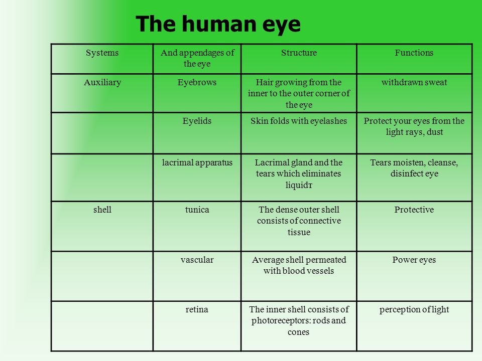 Anatomy Organs Of Vision Ppt Video Online Download