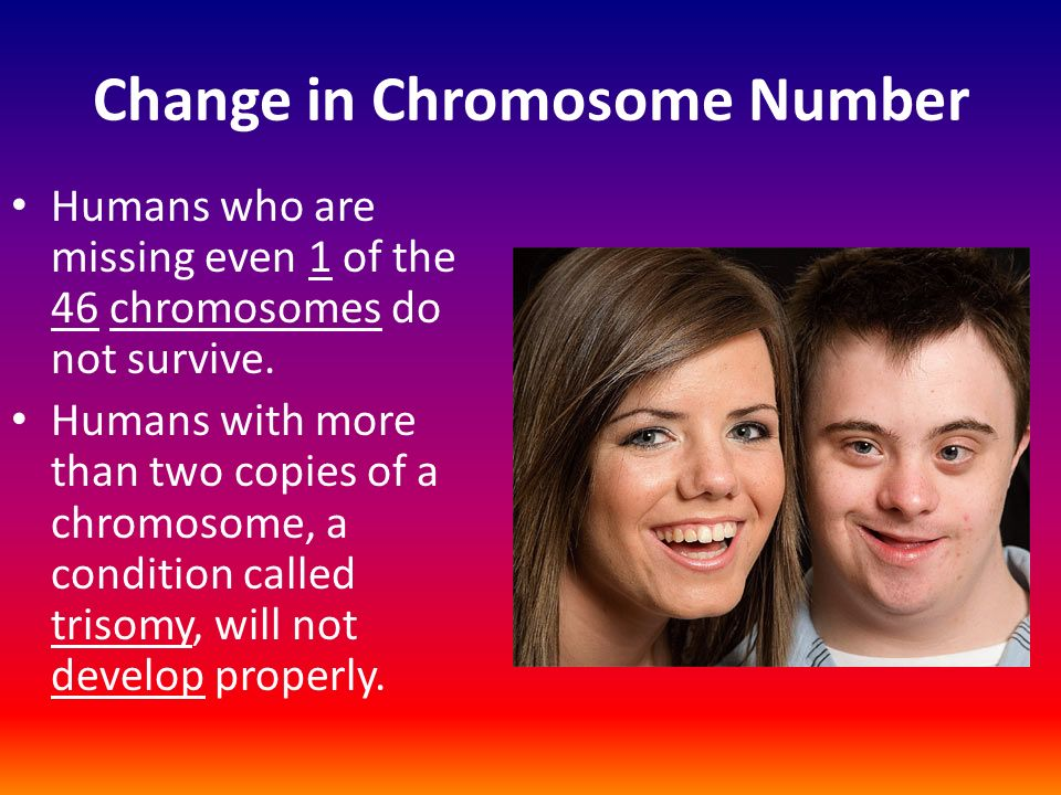 Chapter 6 Section 1 Chromosomes