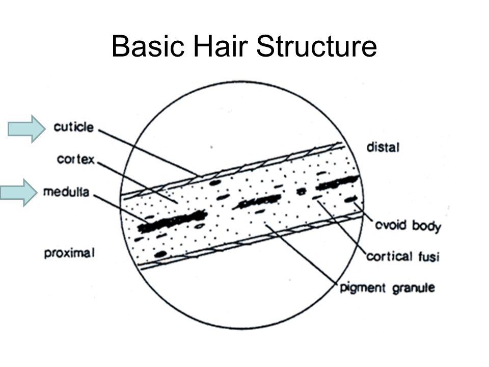 Basic Hair Diagram Trusted Wiring Diagrams