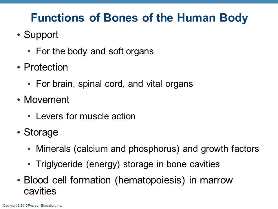 2 Functions of Bones ...