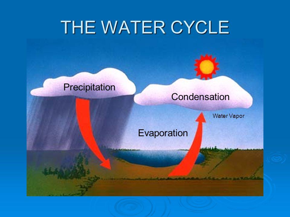 THE+WATER+CYCLE+Precipitation+Condensation+Water+Vapor+Evaporation