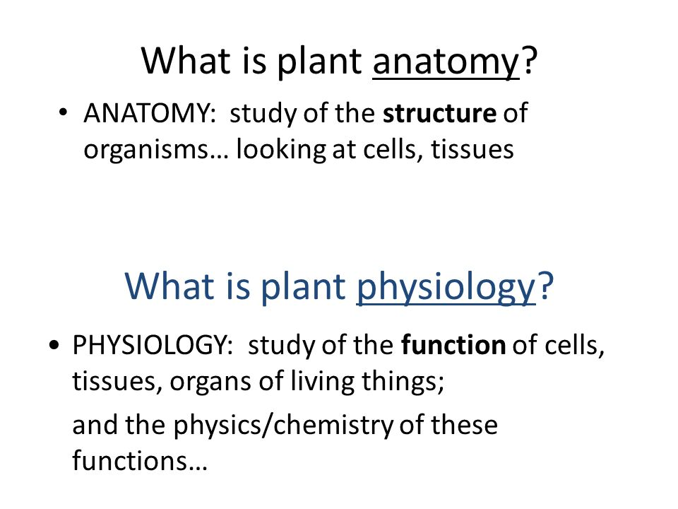Plant Anatomy and Physiology - ppt video online download