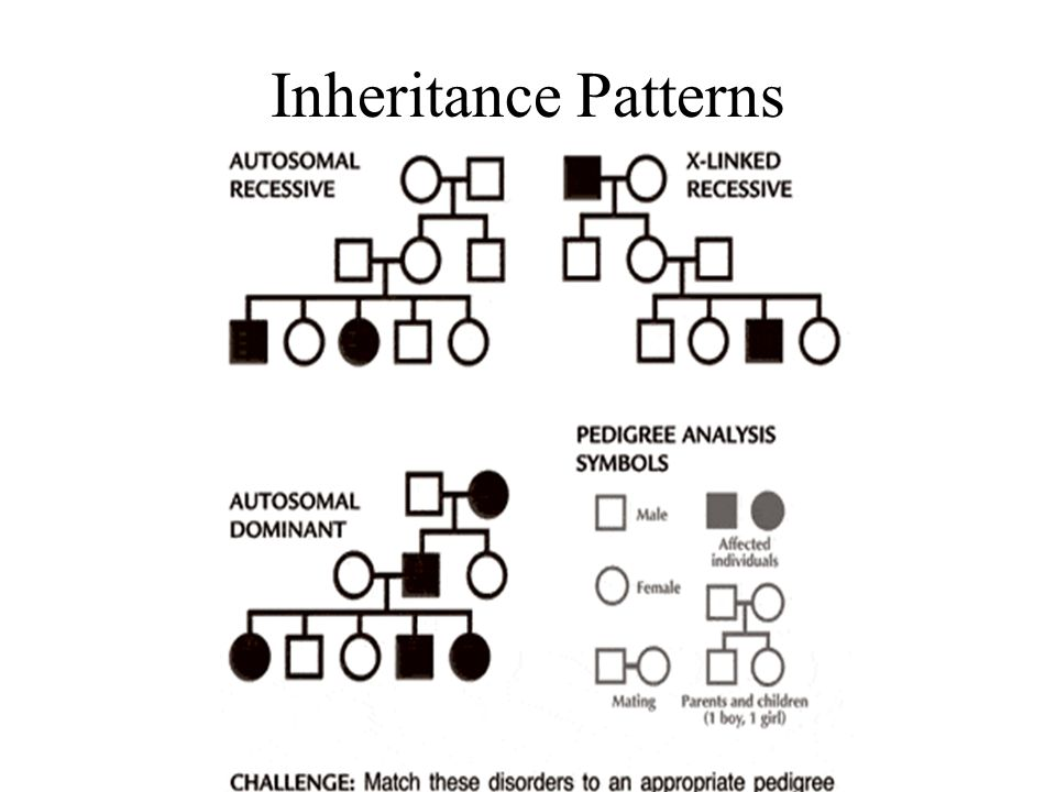 A way to look at inheritance patterns over many generations ppt Impressive Patterns Of Inheritance